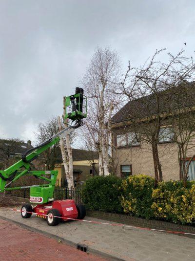 J. de Mooij Hovenierin Rijnsburg is gespecialiseerd in het rooien en snoeien van bomen