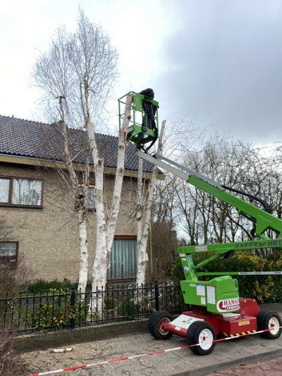 J. de Mooij Hovenier in Rijnsburg is gespecialiseerd in het rooien en snoeien van bomen