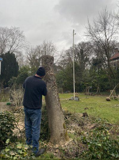 Hoveniersbedrijf J. de Mooij in Rijnsburg is gespecialiseerd in het snoien en rooien van bomen